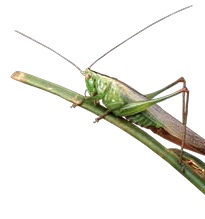 JUL 22 Grasshopper story