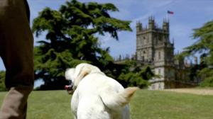 Downton-Abbey-dog_0